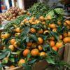 In season Winter, Kitchen to Table, Yamba